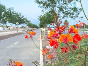 Playa drain trail with flower